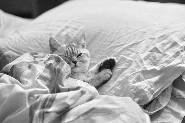 Waarom slaapt een kat bij je