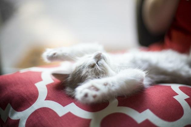 hoeveel uur slaapt een kat