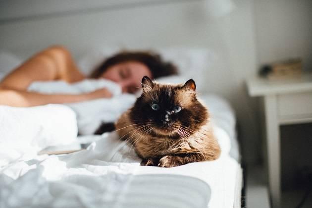 kat slaapt in je bed